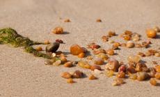 Bursztyny na bałtyckiej plaży