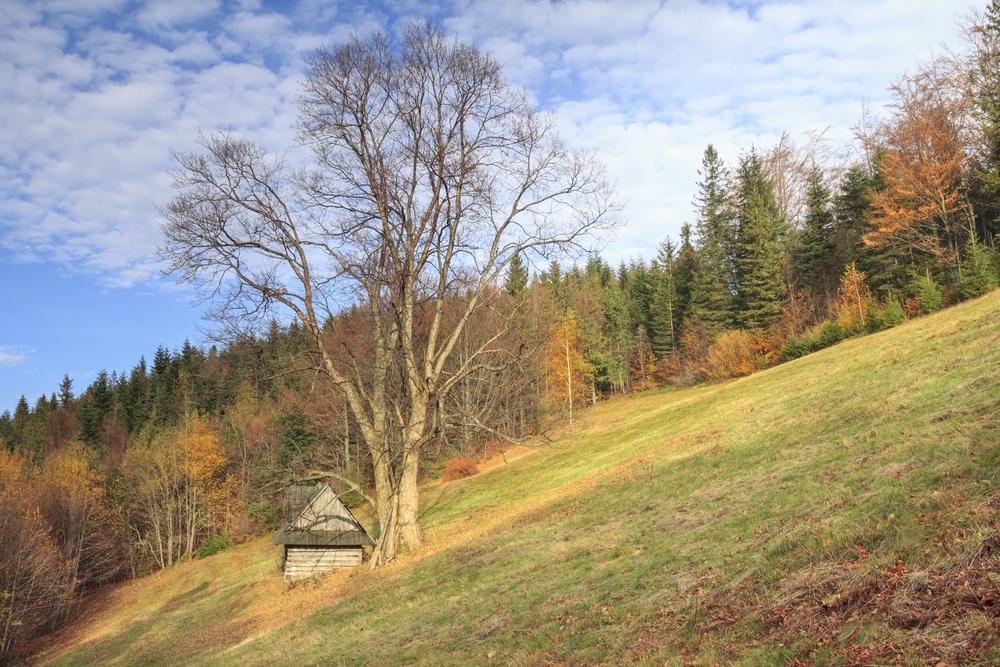 Biegi górskie - Beskid Śląski